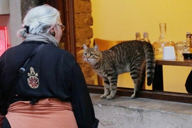 猫が教えてくれたこと 場面写真16