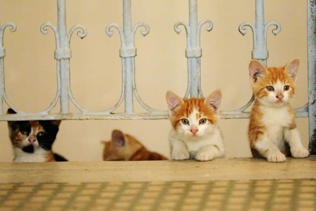 猫が教えてくれたこと 場面写真3
