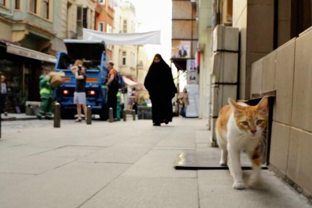 猫が教えてくれたこと 場面写真5