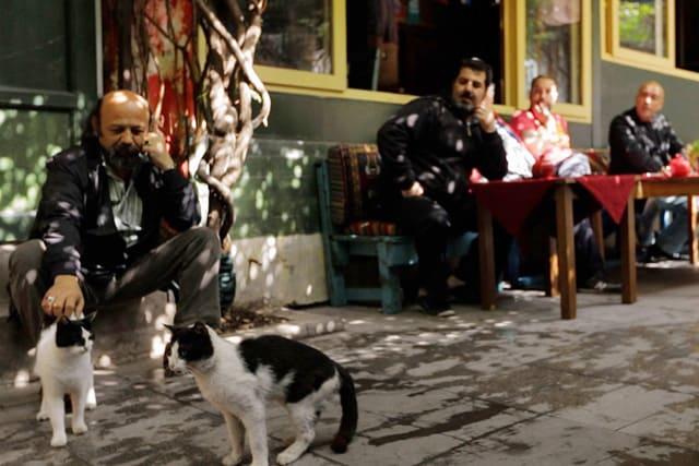 猫が教えてくれたこと 場面写真6