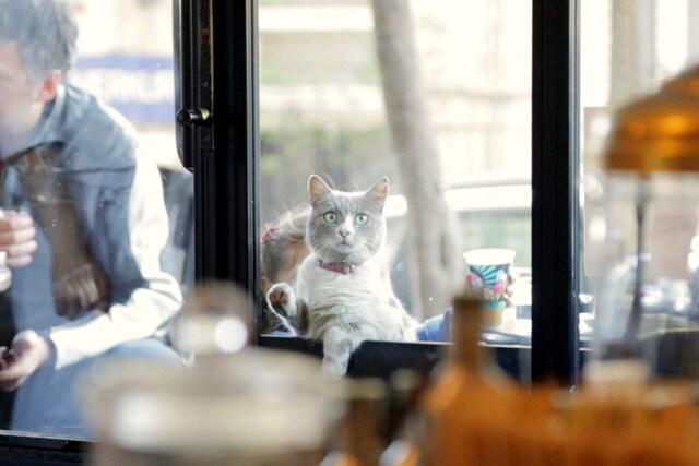 猫が教えてくれたこと 場面写真7