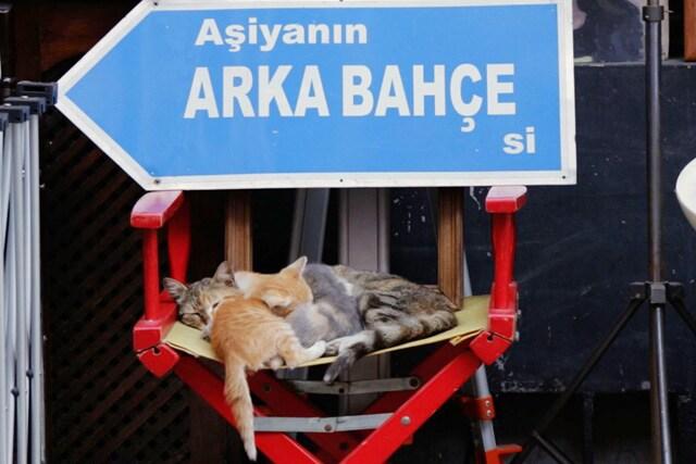 猫が教えてくれたこと 場面写真9