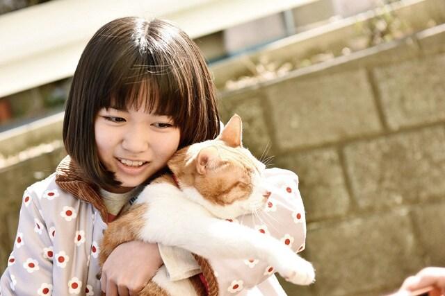 トラさん~僕が猫になったワケ~ 場面写真3
