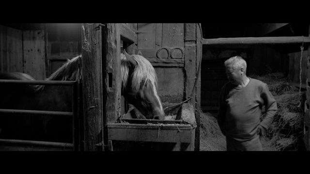 馬ありて 場面写真9