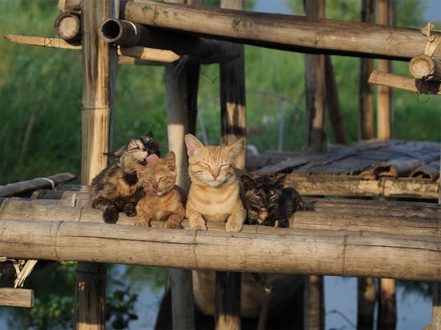 劇場版 岩合光昭の世界ネコ歩き あるがままに、水と大地のネコ家族 場面写真1