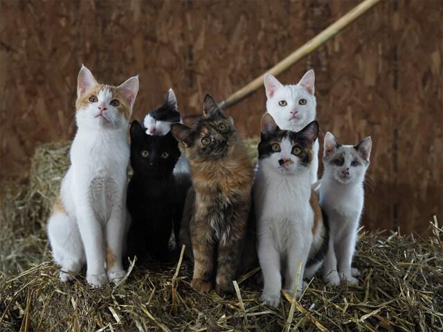 劇場版 岩合光昭の世界ネコ歩き あるがままに、水と大地のネコ家族 場面写真2