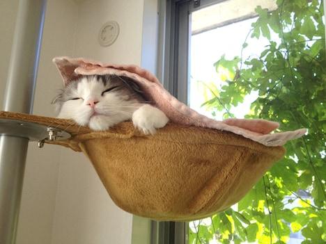 今日マチ子の飼い猫「ムーム」。