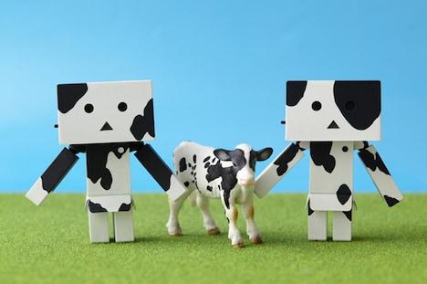 左が「ホルスタイン(白)」、右が「ホルスタイン(黒)」。中央の牛は商品には付属しない。(c)KIYOHIKO AZUMA/YOTUBA SUTAZIO