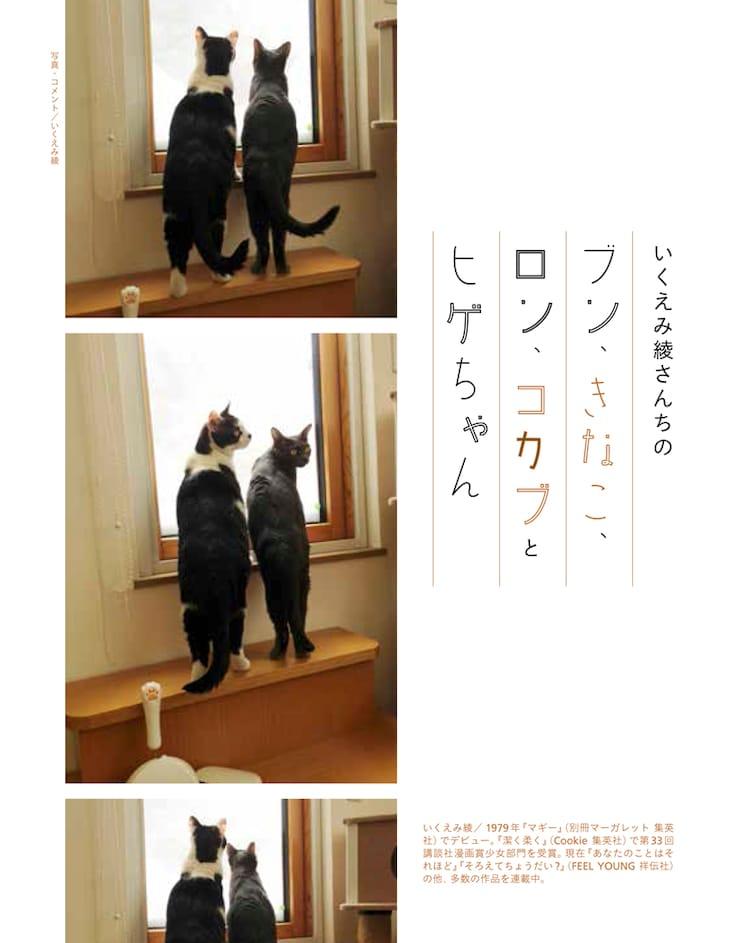 「漫画家の猫」より、いくえみ綾の愛猫。