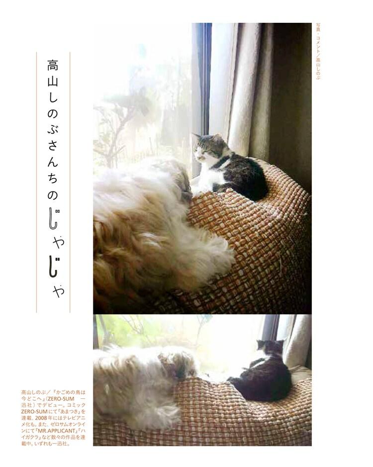 「漫画家の猫」より、高山しのぶの愛猫。