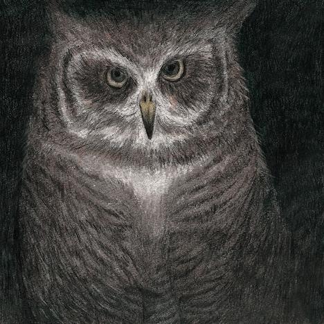「フクロウの声が聞こえる」ジャケット