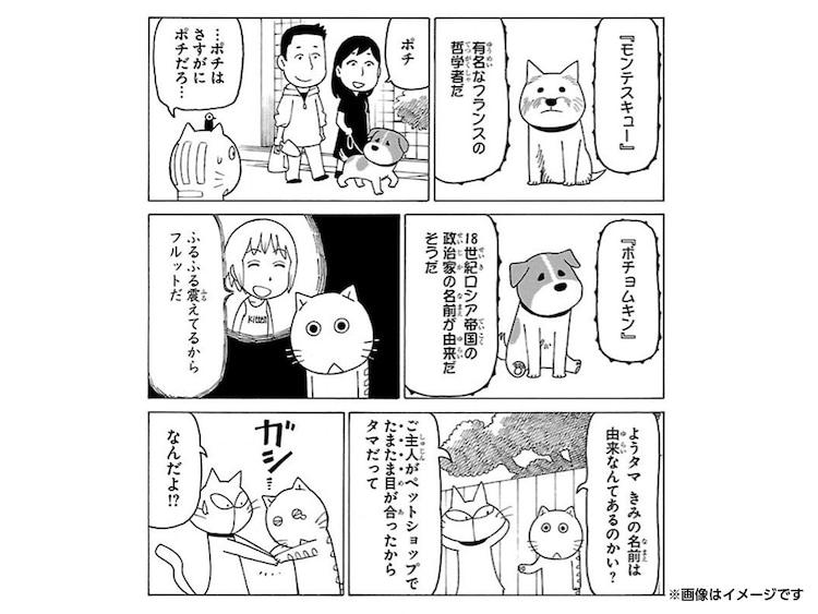 愛猫が「木曜日のフルット」に登場できる権利。