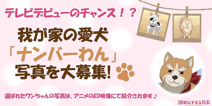 TVアニメ「織田シナモン信長」写真募集企画の告知画像。