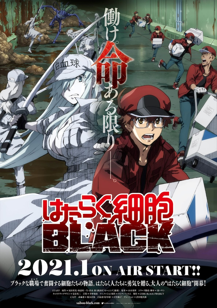 'Hataraku Saibou Black' Reveals First PV, Additional Cast, Staff