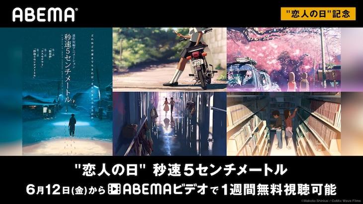 「秒速5センチメートル」ビジュアル(c)Makoto Shinkai / CoMix Wave Films