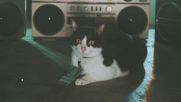 「dog kawaii」という曲なのに、MV後半にはなんと猫も登場。