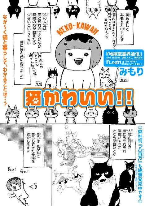 「猫かわいい!!」より。