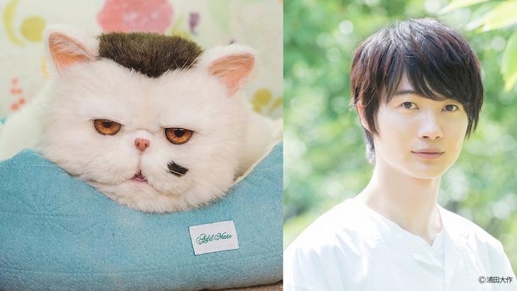 ふくまる(左)、神木隆之介(右)。(c)「おじさまと猫」製作委員会