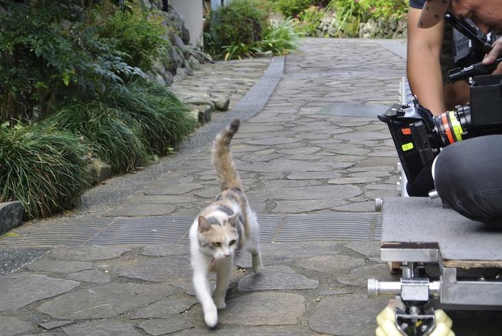 「先生と迷い猫」でミイを演じる三毛猫ドロップ。(c)2015「先生と迷い猫」製作委員会