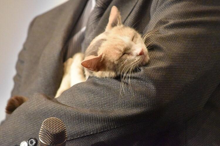 イッセー尾形の腕の中でまどろむ三毛猫ドロップ。