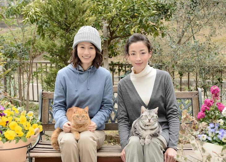 連続ドラマW「グーグーだって猫である2 -good good the fortune cat-」 (c)WOWOW