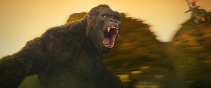 「キングコング:髑髏島の巨神」新場面写真