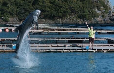 「ボクはボク、クジラはクジラで、泳いでいる。」