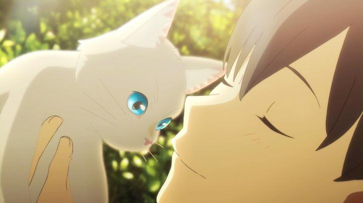 「泣きたい私は猫をかぶる」新場面カット