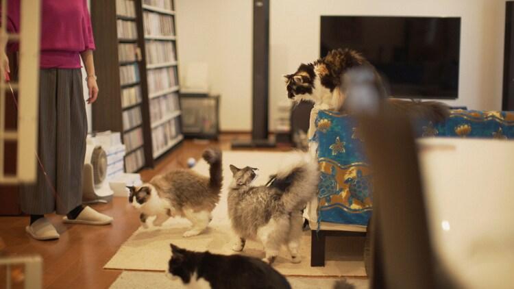 「ネコメンタリー 猫も、杓子も。尾崎将也とグーとばななとダリとロビンと鏑とさくら」