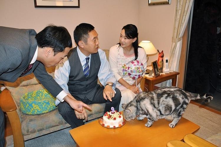 猫用に作られたケーキの匂いをかぐ黒豆(手前)。