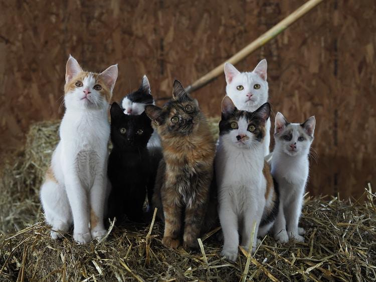 「劇場版 岩合光昭の世界ネコ歩き あるがままに、水と大地のネコ家族」