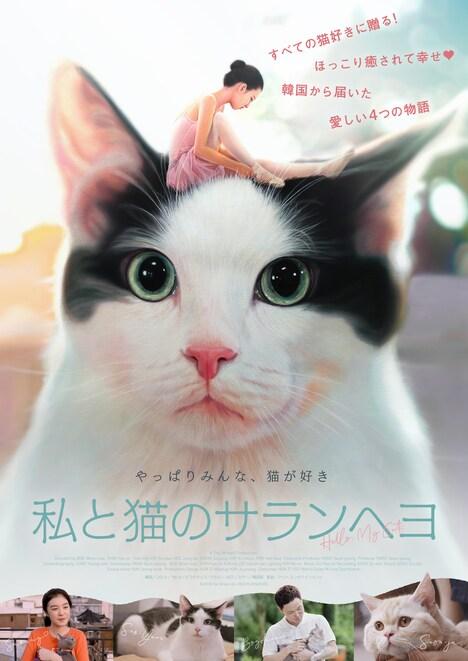 「私と猫のサランヘヨ」ビジュアル