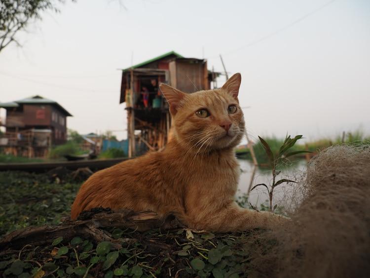 「劇場版 岩合光昭の世界ネコ歩き あるがままに、水と大地のネコ家族」新場面写真