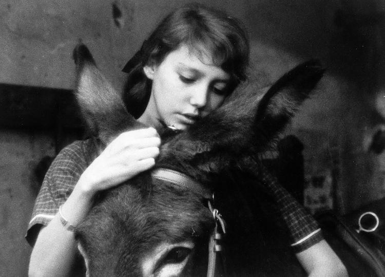「バルタザールどこへ行く」 (c) 1966 Argos Films - Parc Films - Athos Films - Svensk Filmindustri