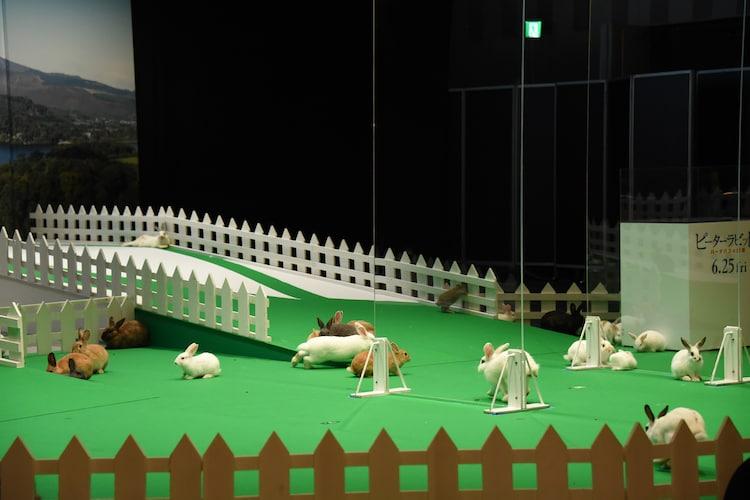 ウサギが集結した会場の様子。