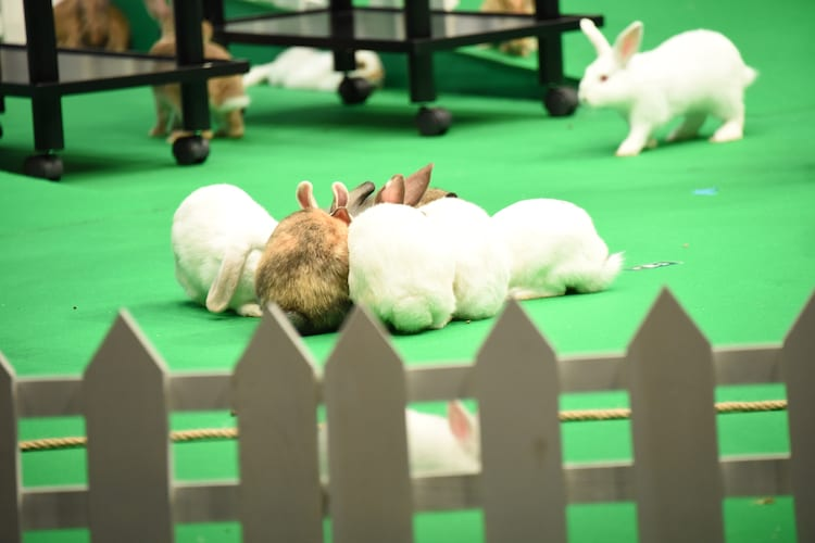 千葉雄大の餌の皿に群がるウサギたち。