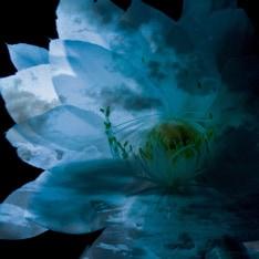 写真は12月19日に発売されたばかりの、LUNA SEAトリビュートアルバム「LUNA SEA MEMORIAL COVER ALBUM -Re:birth-」。昨日のライブでは、このアルバムでカバーされた名曲が多数披露されている。