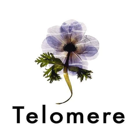 「Telomere」を制作したoooは、Perfumeやトータス松本、布袋寅泰ほか数多くのアーティストのアートワークを手がけるデザインプロダクション。