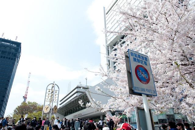 中野サンプラザ前の桜は満開。