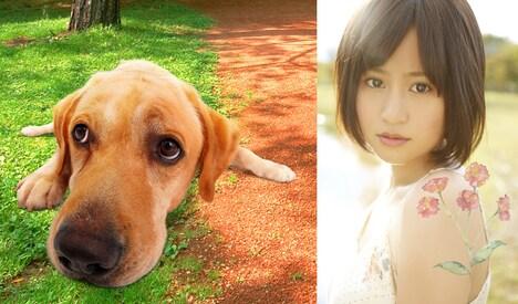 前田敦子(写真右)とまさお君(左)。