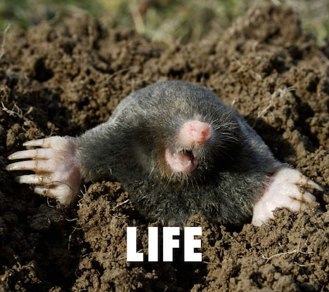 フジファブリック「LIFE」初回限定盤ジャケット