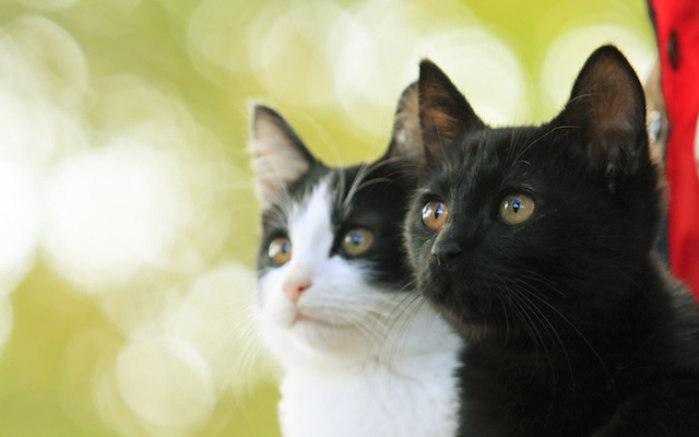 「猫なんかよんでもこない。」 (c)2015杉作・実業之日本社/「猫なんかよんでもこない。」製作委員会