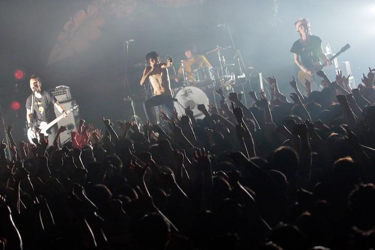 ザ・クロマニヨンズ「ザ・クロマニヨンズ TOUR JUNGLE 9 2015-2016」の模様。(撮影:柴田恵理)