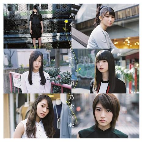 乃木坂46「ハルジオンが咲く頃」Type-Dジャケット