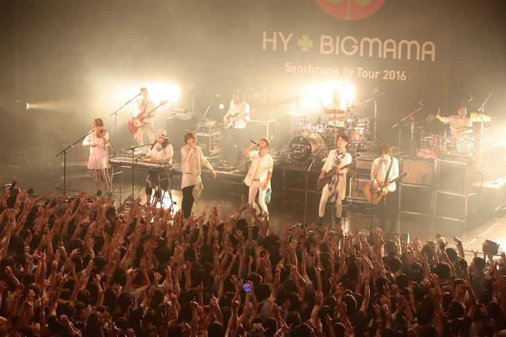 HY+BIGMAMA(撮影:板橋淳一)
