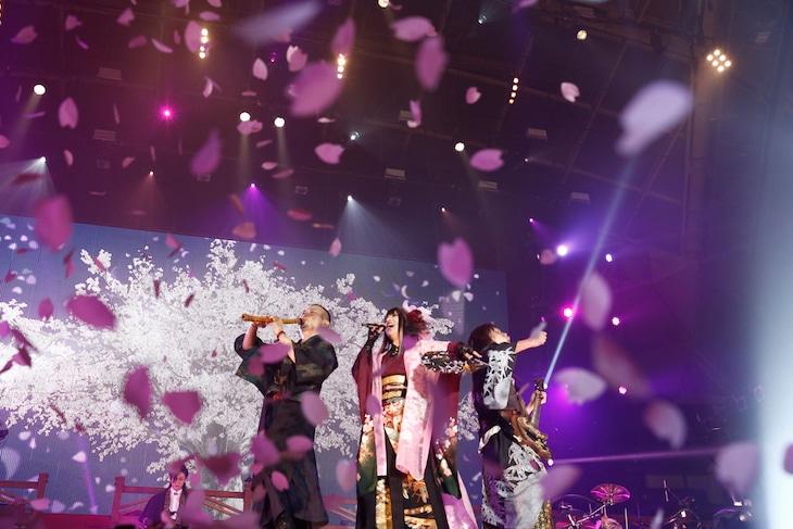 「和楽器バンド 大新年会2017 東京体育館 桜ノ宴」の様子。(写真提供:avex)