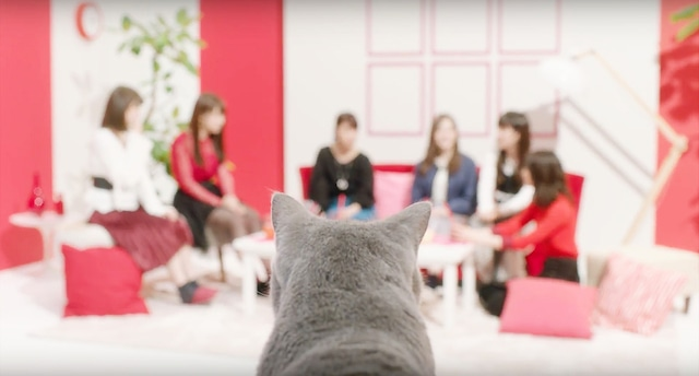 アイペット損害保険株式会社WebCM第2弾「女子会」編のワンシーン。