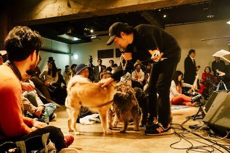 「犬たちのためのコンサート」の様子。(撮影:タイコウクニヨシ)
