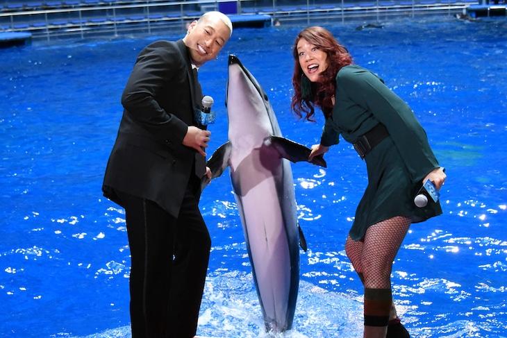 イルカと握手する関口メンディー(左)、LiLiCo(右)。