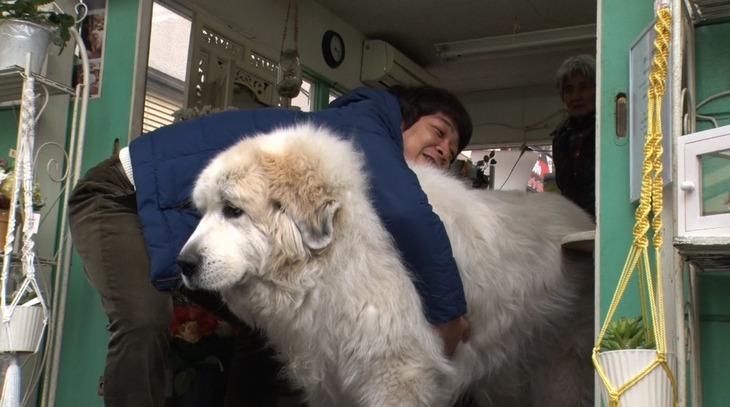 巨大な犬に抱きつく銀シャリ鰻。(c)読売テレビ